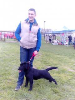 V CACIB Bogatić 2016 – praznik ljubitelja pasa u Bogatiću