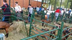 Poljoprivrednici Opštine Bogatić u poseti Novosadskom sajmu
