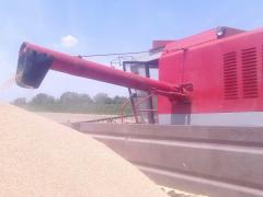 Žetva pšenice u Mačvi