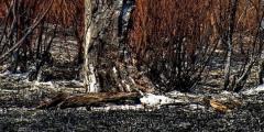 Апел да се не пали ватра у природи због повећаног ризика од пожарa