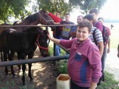 Praktična nastava za učenike Mačvanske srednje škole na hipodromu u Bogatiću