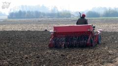 Касни сетва пшенице у Мачви