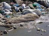 Životinjski otpad - problem koji zahteva hitno rešavanje