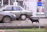 Počela akcija uklanjanja pasa lutalica u Bogatiću