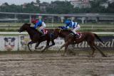 Mačvanska Perfect Slipper druga u Trial Stakes-u