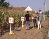 Dani polja kukuruza u Bogatiću