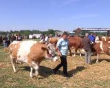 VII Izložba goveda i ovaca u Bogatiću-Emisija