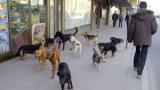 Javno-privatnim partnerstvom rešiće se problem napuštenih životinja i uklanjanja životinjskog otpada