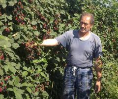 Predavanje o jagodičastom voću