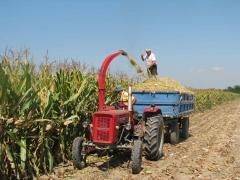 Počelo siliranje kukuruza u Mačvi