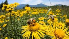 Više sredstava iz državnog budžeta za pomoć pčelarima u 2017. godini