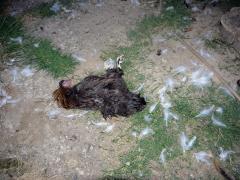 Građani reporteri - Problem sa psima lutalicama u Crnoj Bari