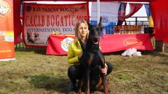 ŠAMPION VII CACIB BOGATIĆ 2018