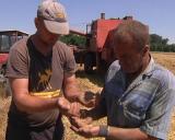 Žetva pšenice u punom jeku