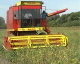 Počela žetva soje, suncokreta i berba kukuruza